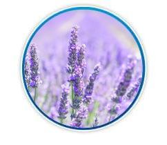 materac Beast Lavender